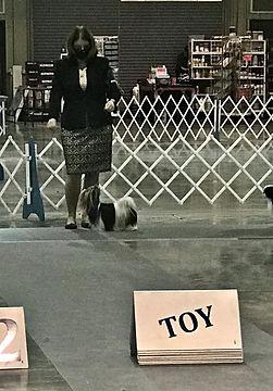 1-17-21 Kathy & Gem in Toy group ring Tu