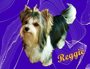 reggie%20for%20website_edited.jpg