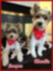 9-15 Charlie & Cooper _ 2.5 years for PP