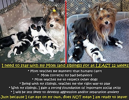 12 weeks with puppies.jpg