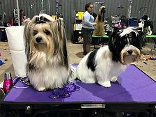 10-24-2020 Winston & Marshall ready to s