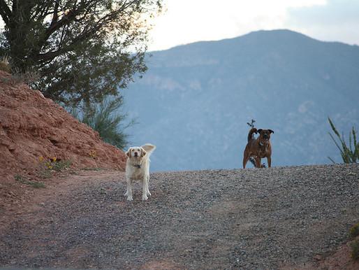 Велосипедисты и собаки: можно ли избежать нападения?