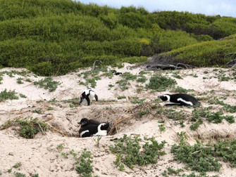 Local & healthy living in South Africa---Penguin