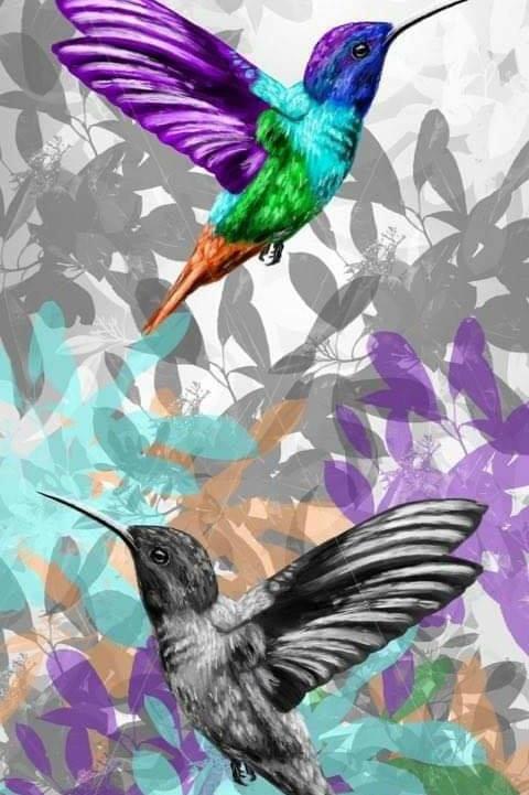 Double Humming Bird Print