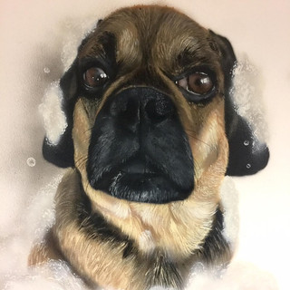 Dog Grooming Interior Hand Painted Mural