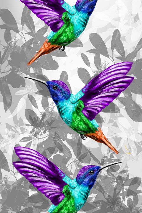 Triple Humming Bird Print.