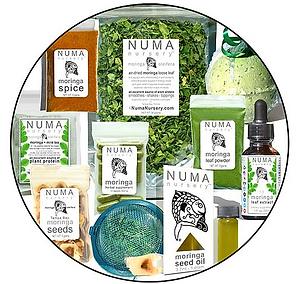 organic moringa tea sale