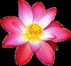 Floral Skincare Natural
