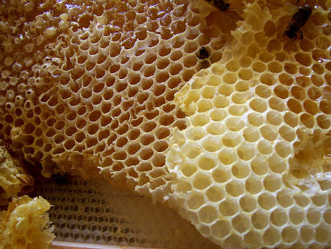beeswax for skincare