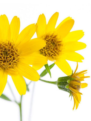 arnica extract for skincare