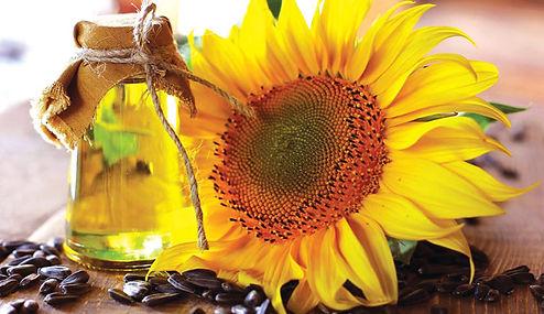 sunflower oil for skincare
