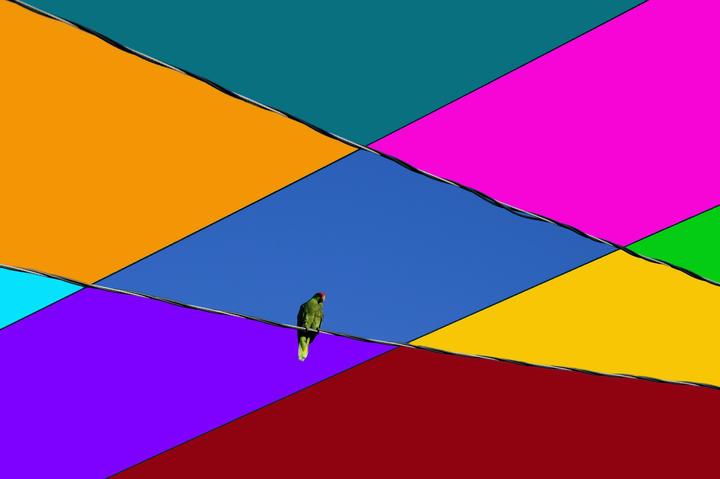ParrotColors_7185.jpg