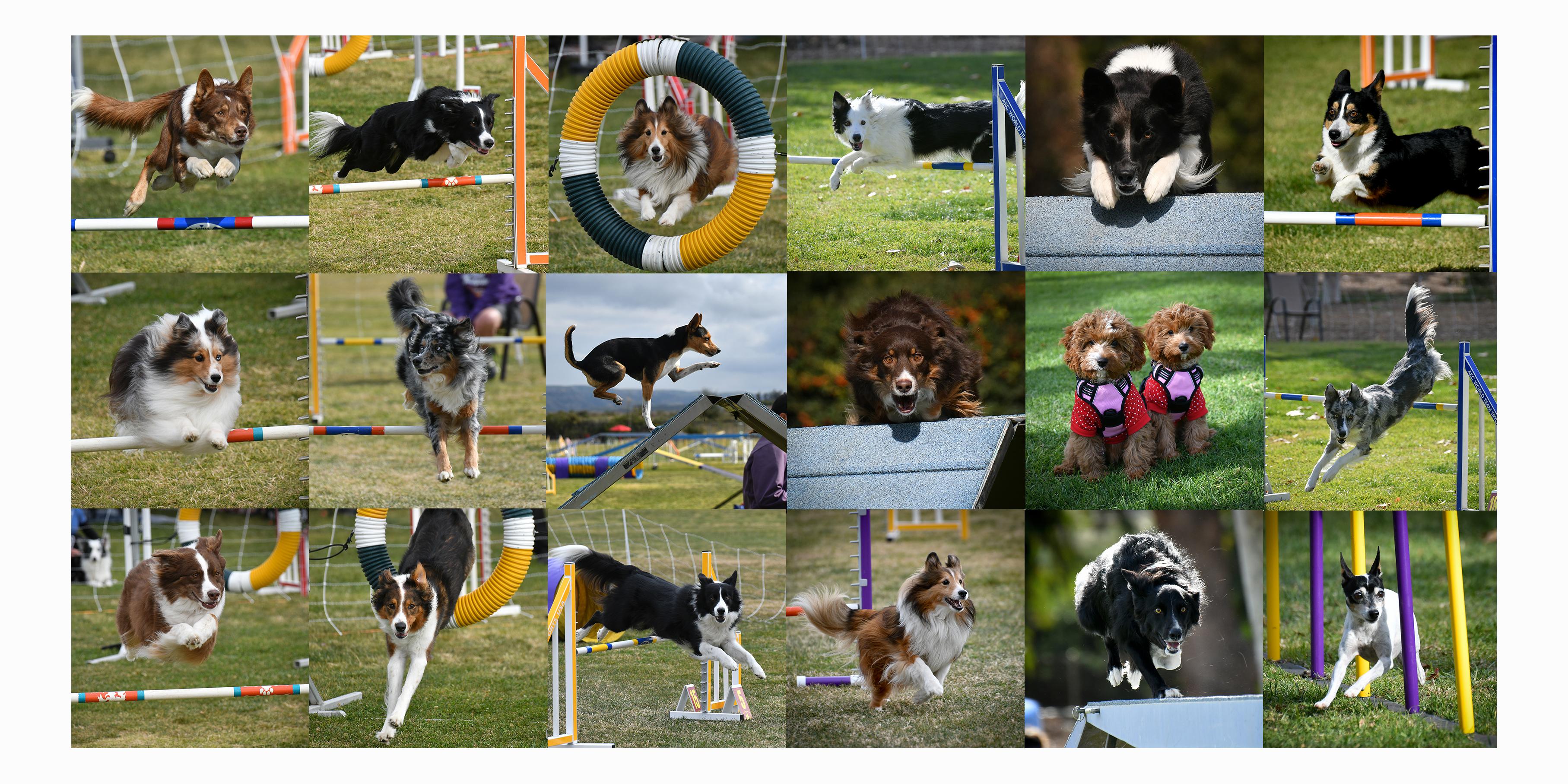 Shop - Canine Sports Images