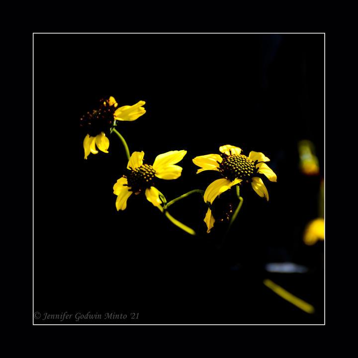Yellow flowers1_5809.jpg