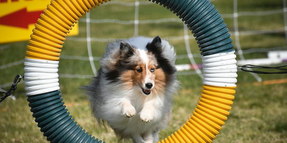 USDAA - Happy Dog Agility July 10 - 11, 2021 • Moorpark, CA