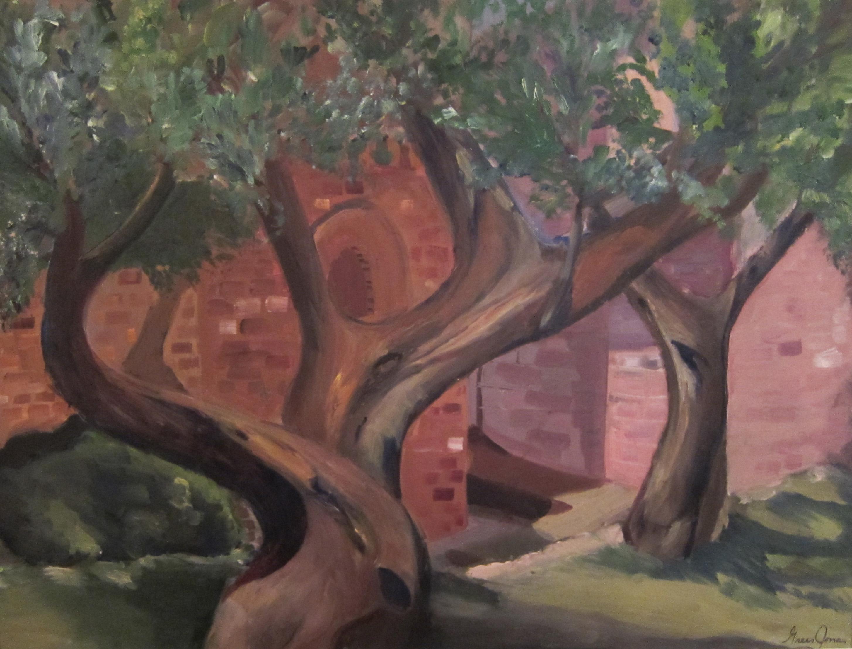 Backyard in Assisi