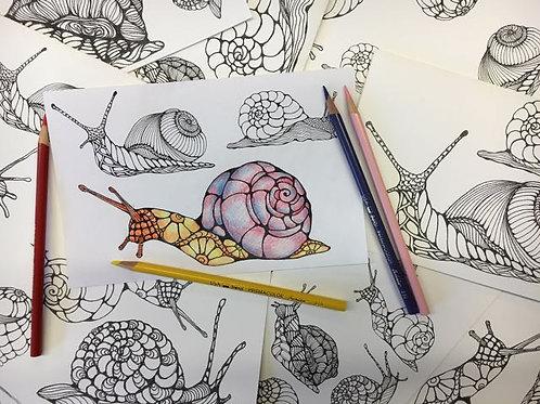 CYO Snails