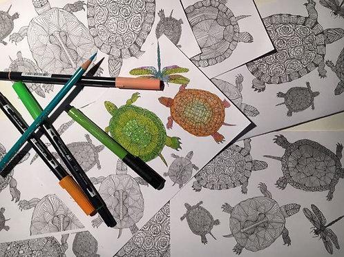 CYO Turtles