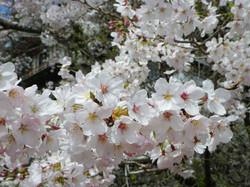 spring_photo01row