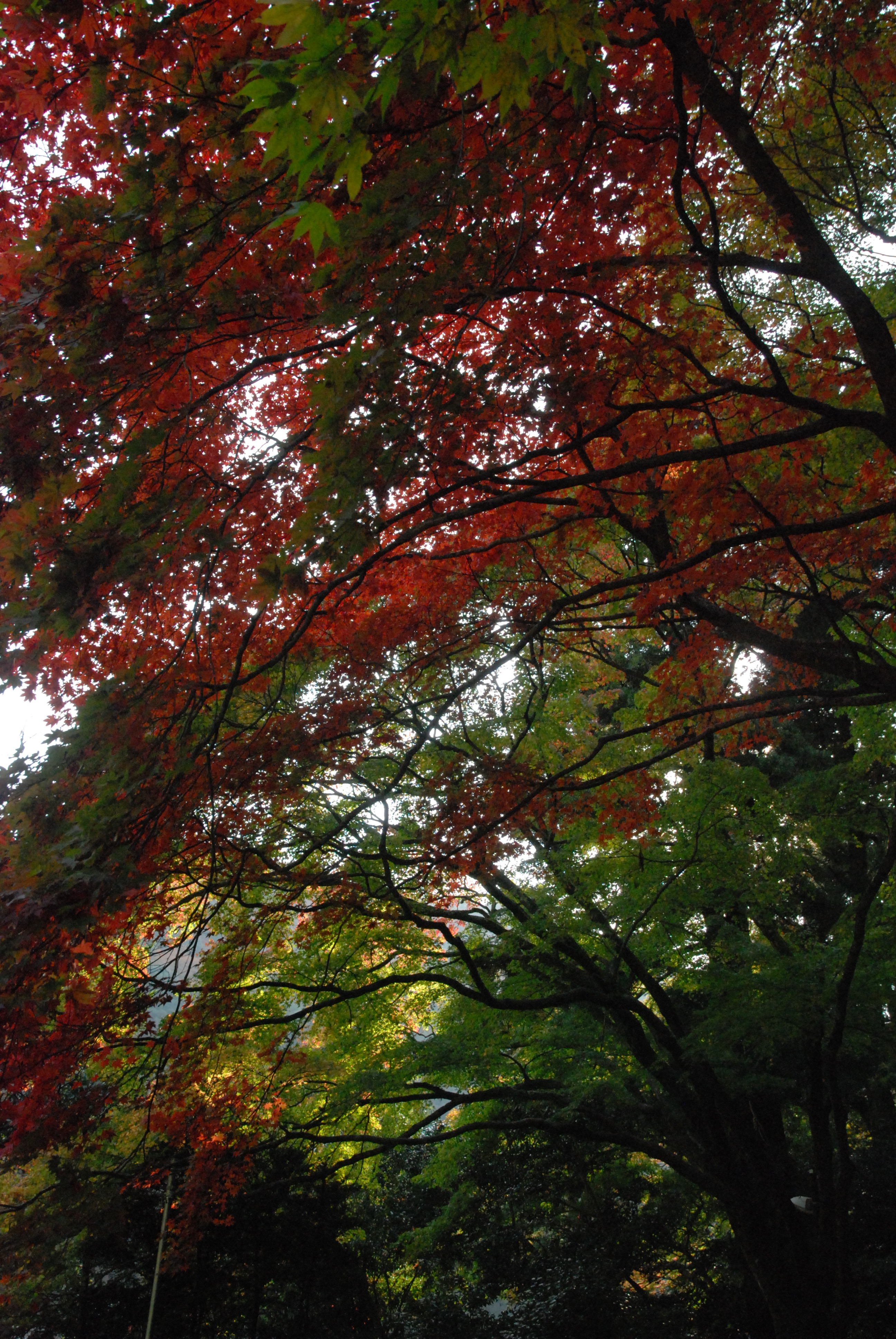 瀧安寺 境内の紅葉