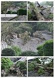 台風被害からの復興.jpg