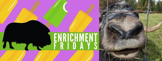 Enrichment Fridays July 12th