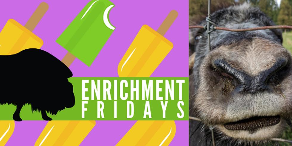 Enrichment Fridays June 28th