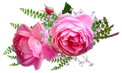 flowers-5253058_1920.png