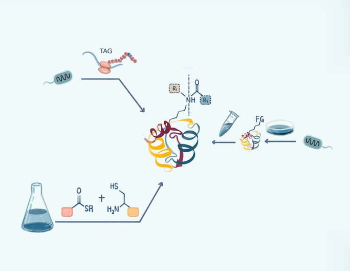 Lysine PTM