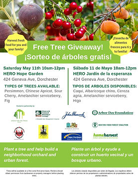 Free Tree Giveaway 11 May English and Sp