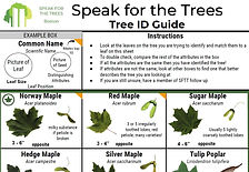 Tree ID guide sftt screenshot.JPG