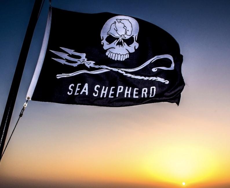 Sea-Shepherd.jpeg