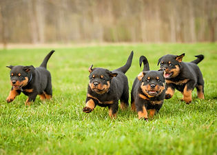 puppy..jpg
