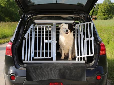 Vale a pena investir em Táxi Dog?