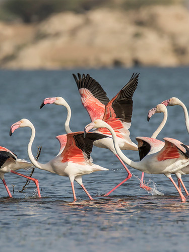 PG_030_A_birds23FLAMINGO.jpg