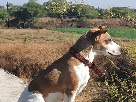 #guard #dogsofinstagram #dog #friend #familyhotels #