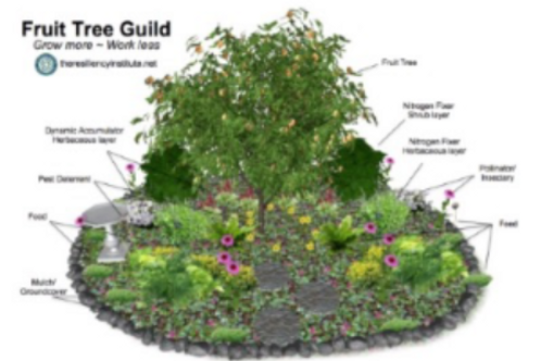 Low Maintenance Landscapes workshop  May 29th