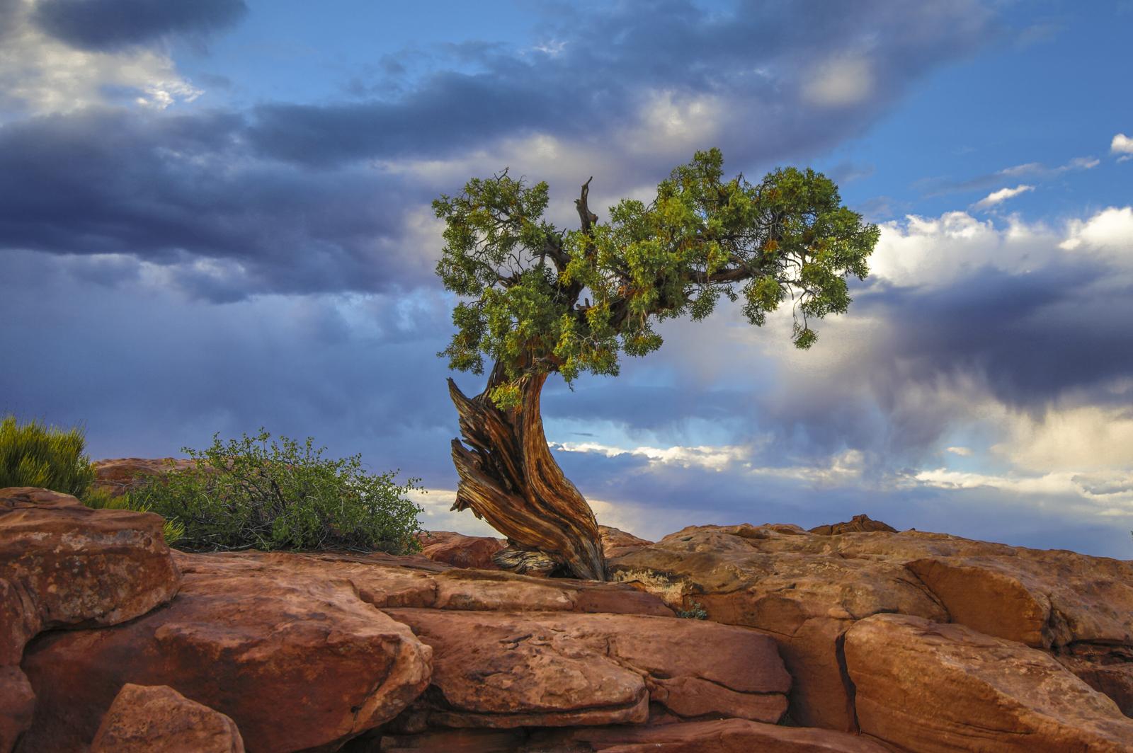 Dead Horse Tree 2017
