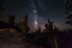 Bristlecone Pines Milkyway