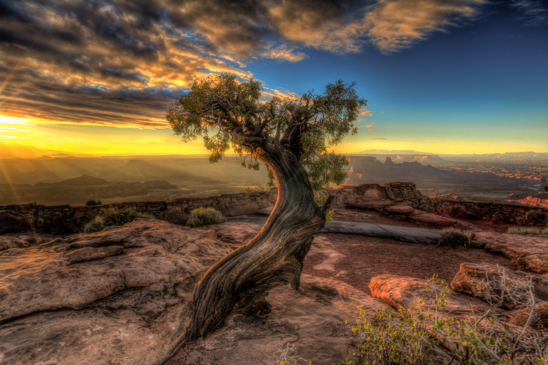 Tree_HDR.jpg