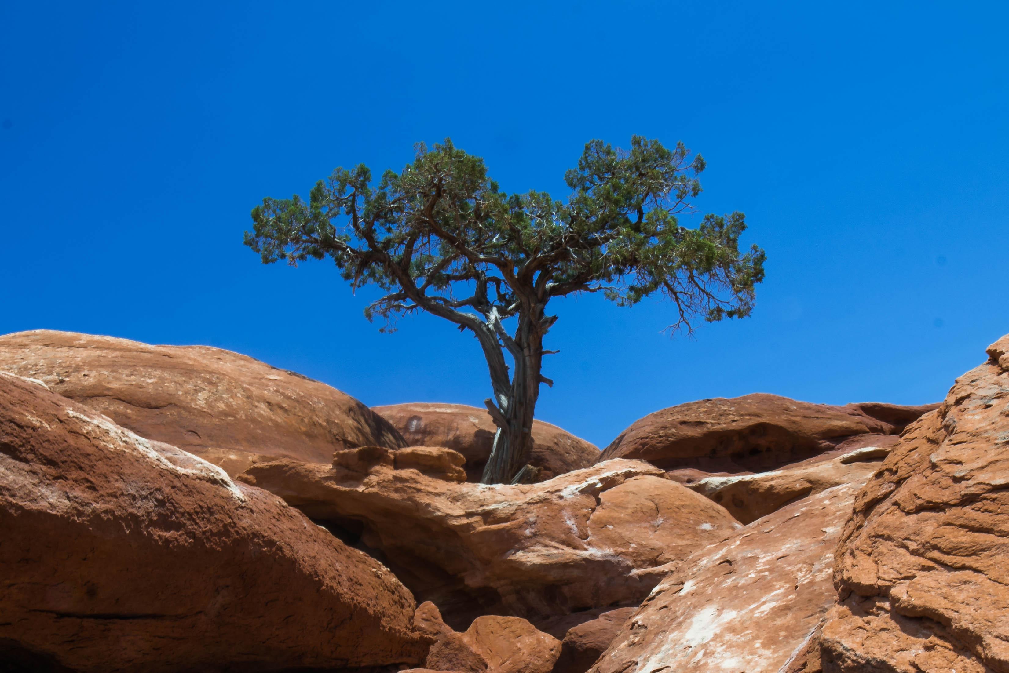 Tree in Rock