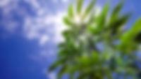 marijuana-plants-growing-outside.jpg