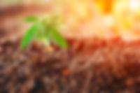hemp-farming-questions-answered-1200x800