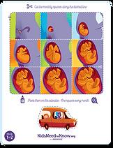 pregnancy calendar activity
