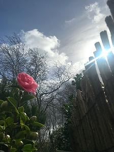 Rose mit Wolke 1.jpg