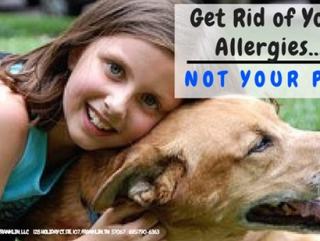 Get Rid of Your Allergies...NOT Your Pet