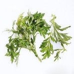 plant (1).jpg