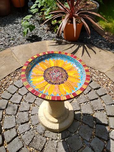 Sunflower in Situ