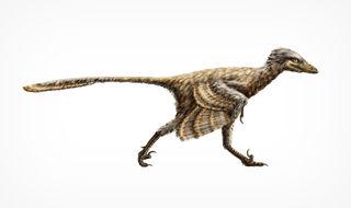Sinornithosaurus Millenii
