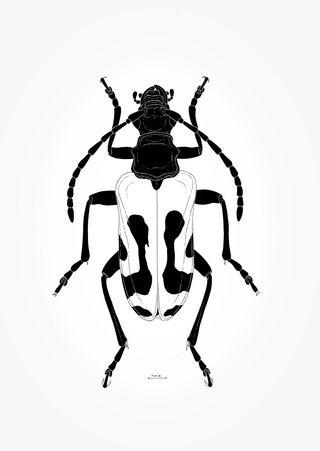 Beetle Linework